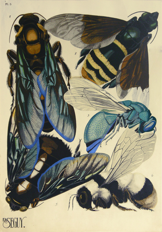 "sealmaiden: Eugene Alain Seguy Plate 5 from ""Insects"" portfolio, 1924 pochoir via Original Prints"
