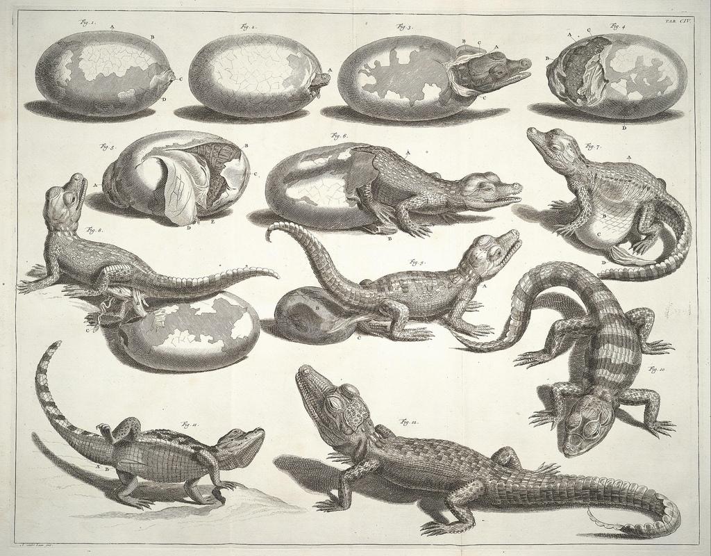 liquidnight: Albertus Seba Illustration from Volume One of Locupletissimi Rerum Naturalium Thesauri, 1734 [via BibliOdyssey]