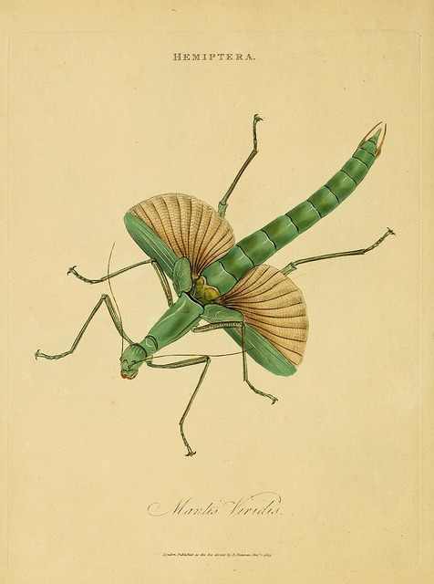 scientificillustration :      n43_w1150  by  BioDivLibrary  on Flickr.