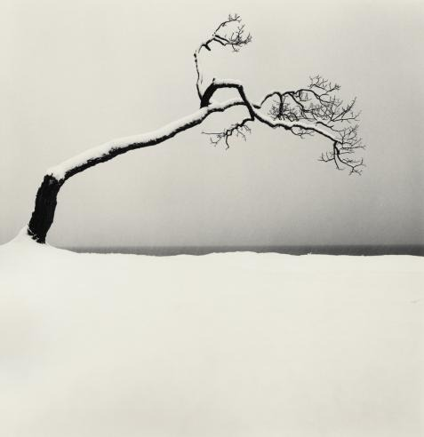 jamreilly: Kussharo Lake Tree, Study 2 Kotan, Hokkaido, Japan Michael Kenna, 2005 (via tartanspartan)