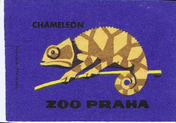 gemmillistan: Chameleon, Zoo Praha (by Matt La'Mont)
