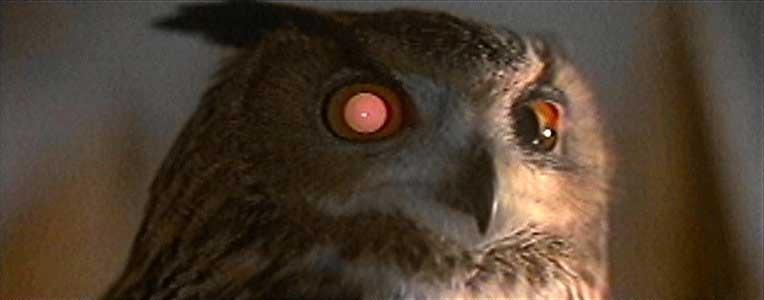 die-zeit: owl