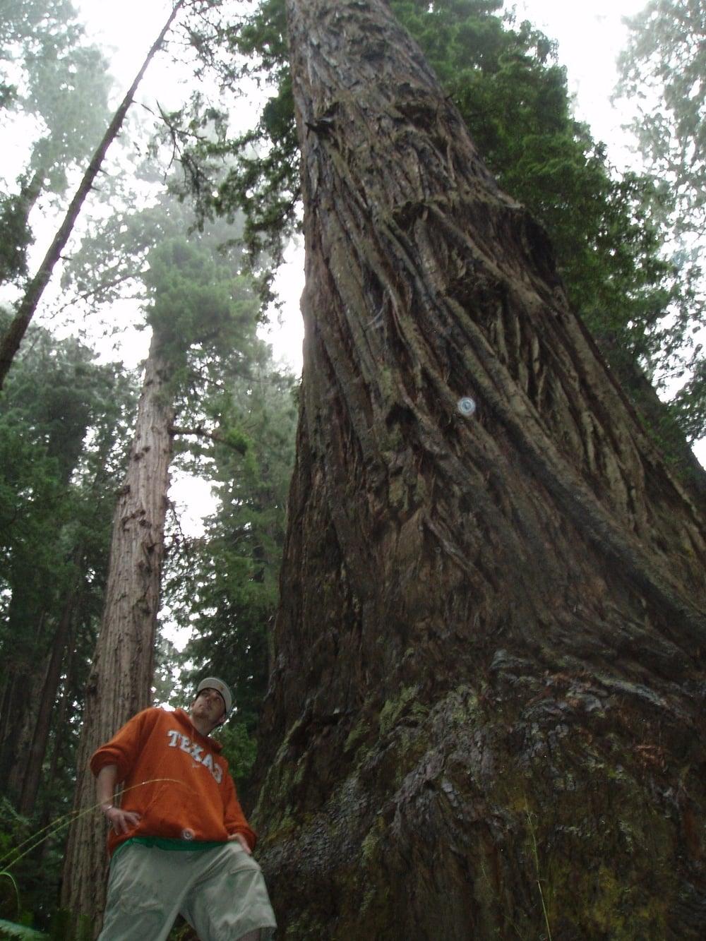 Redwood - Original
