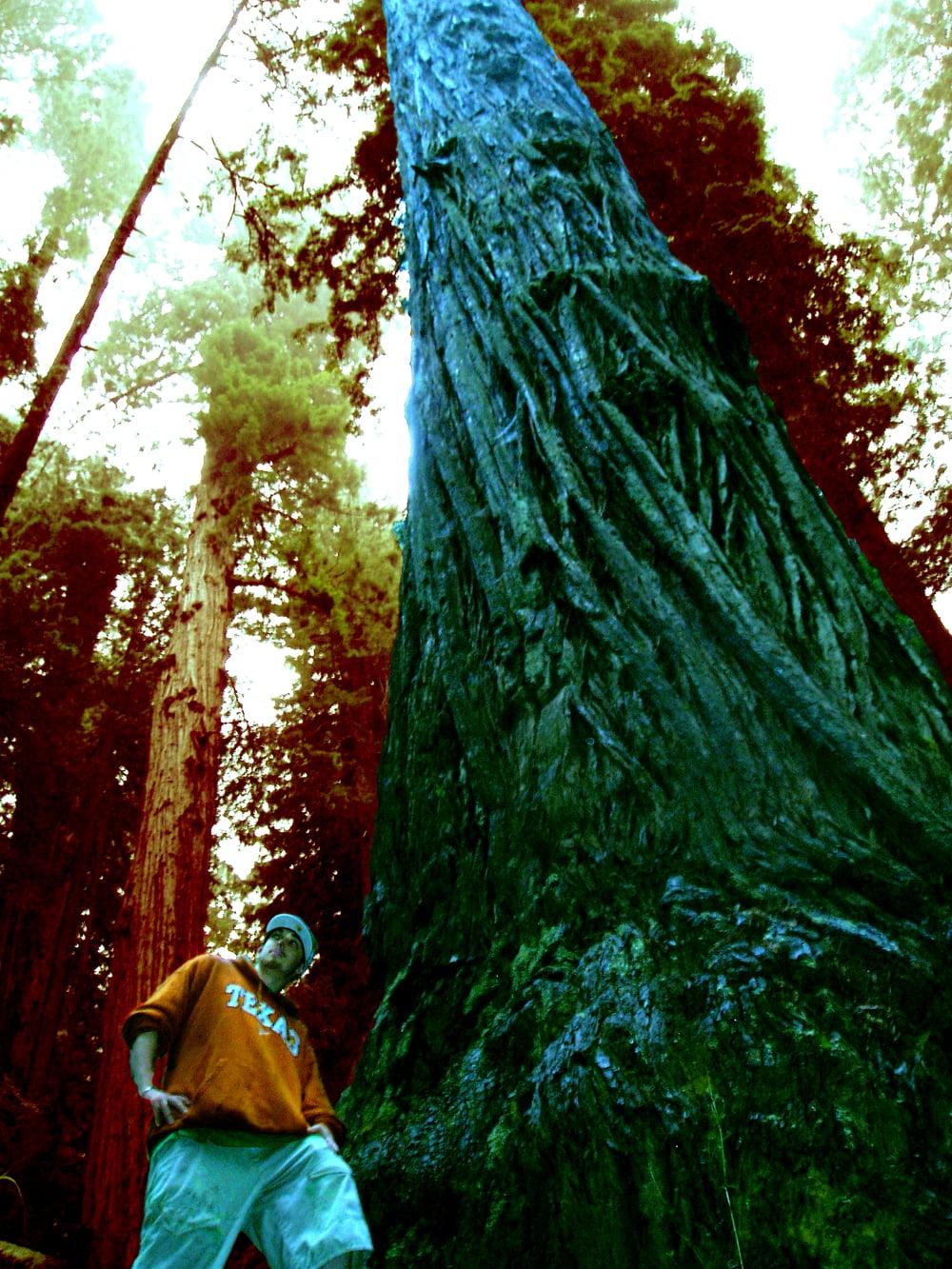 Redwood - Enhanced