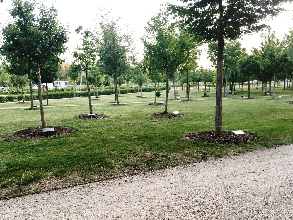 Wittenberg city park is full of trees planted and donated from churches all of the world wishing to celebrate the 500th anniversary.
