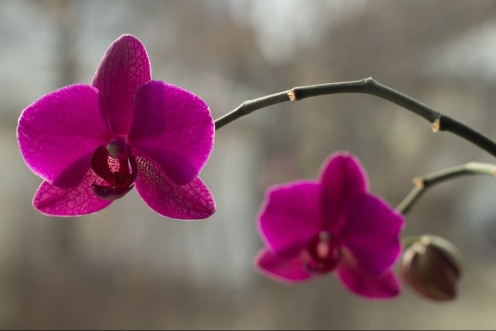 First_Orchid.jpg