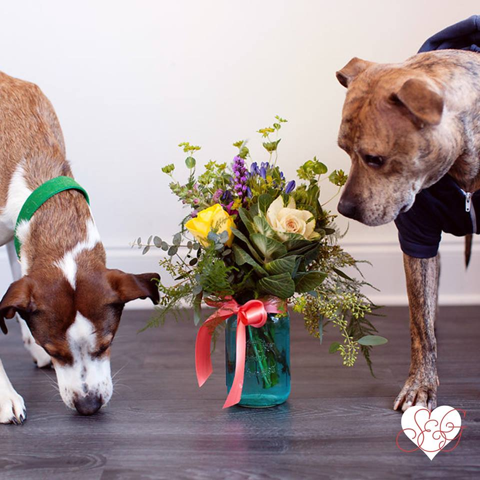 Faline & Odie are seriously in love. Their love is tremendously playful, cheery, & fur-ocious! Photo Credit: Mad Chicken Studio    This Valentine's Day, we have gifts and floral for all the loves of your lives!    What is your love like? Valentine's Day specials emerging daily online at  your one stop  Valentine's Day shop .   Order early and often!