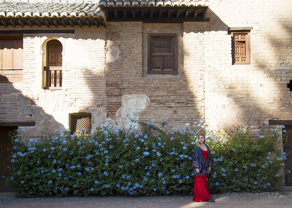 Chelsea against Blue Flowers, Alhambra, Granada
