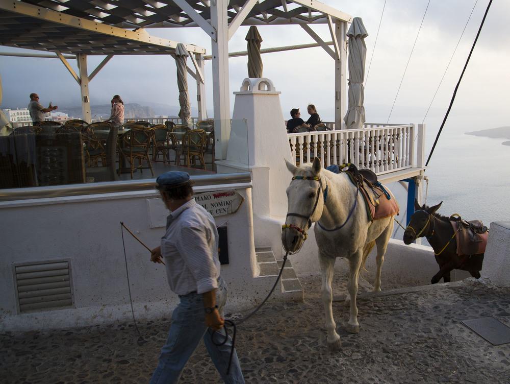Donkeys, Santorini