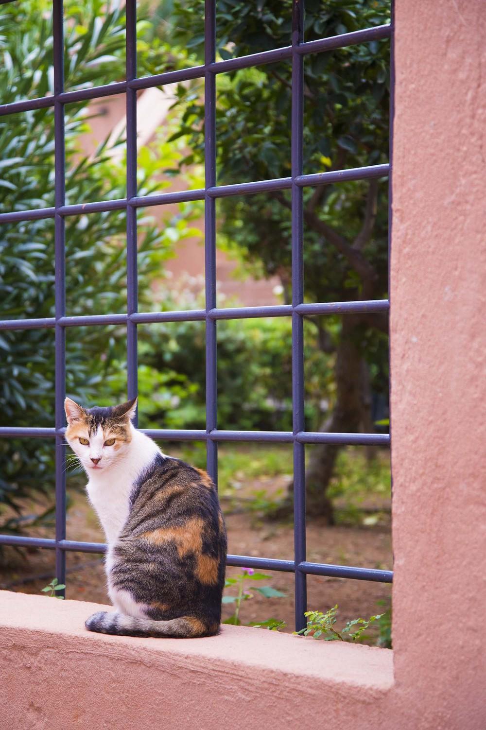 Cat, Koutloufari, Crete