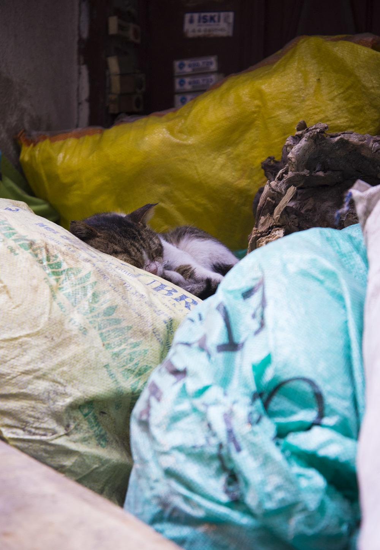 Dumpster Cat, Balat, Istanbul