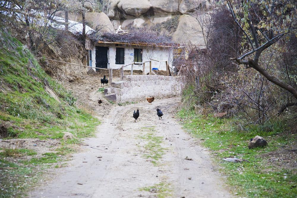 Runaway chickens,Göreme