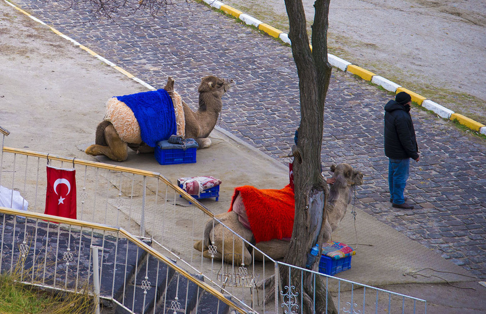 Camel rides, Open Air Museum, Göreme