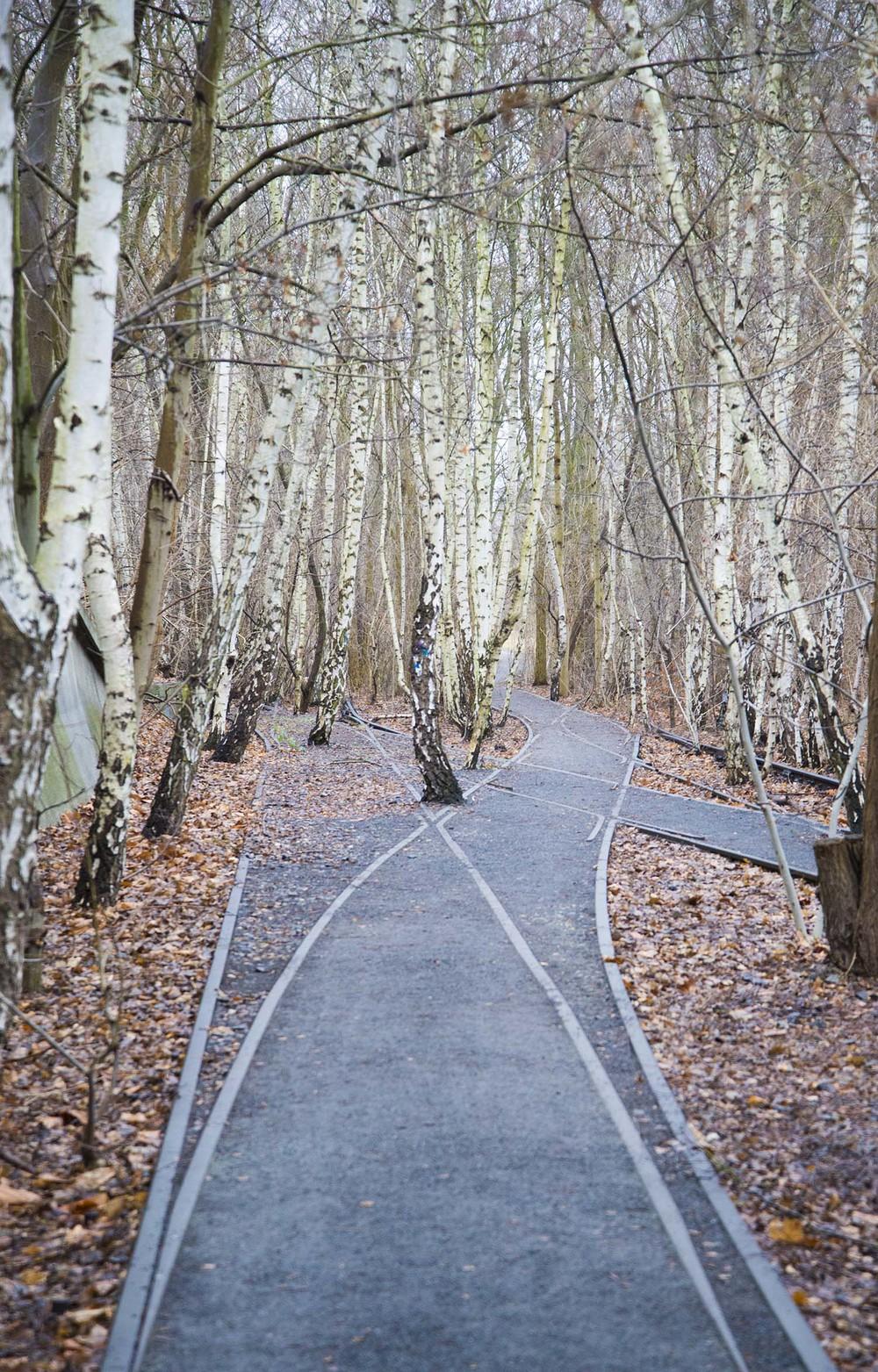 Natur-Park Schöneberger Südgelände, Grün Berlin GmbH & Allianz Environmental Foundation, 199 - 2009, Berlin