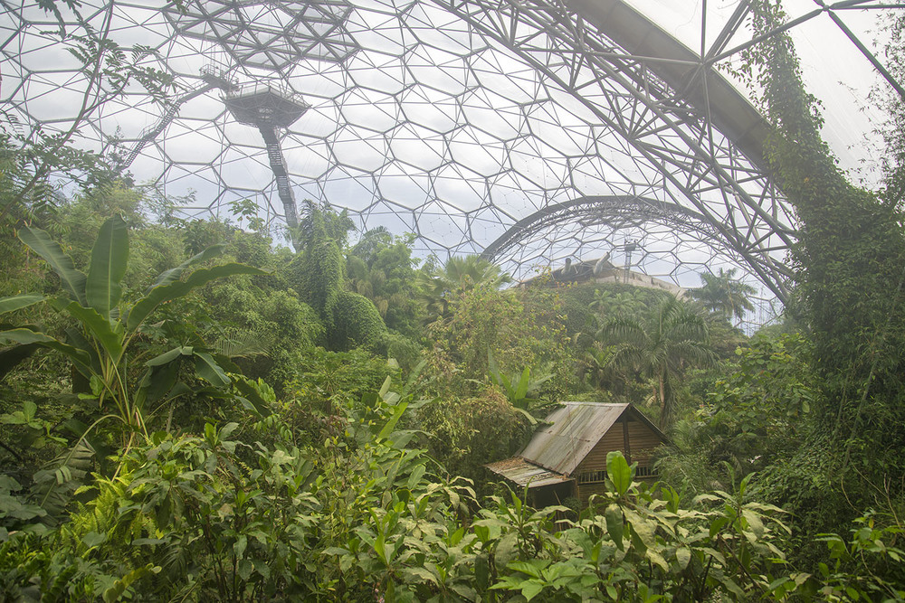 Interior of Rainforest biome at the Eden Project, Cornwall, UK