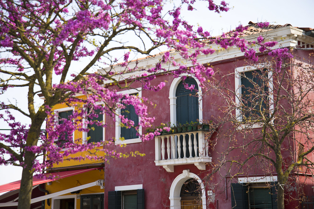 A blooming tree and pink building near the dock of Burano, Italia