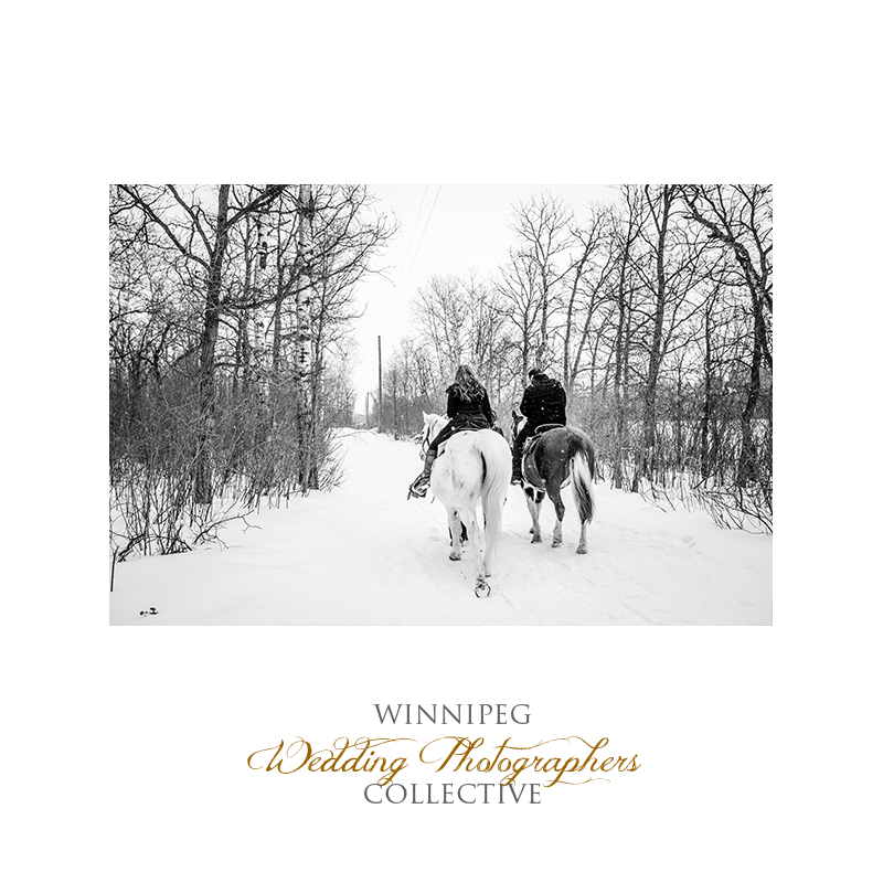 Winter Engagement with Horses010.jpg
