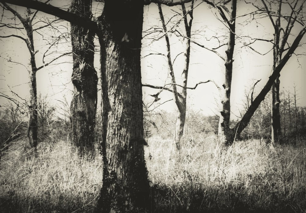 Bird Among Trees, John Blair