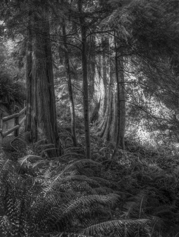 Beth Goyer, Deception Park Woods