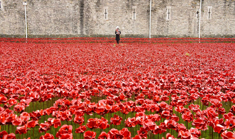 The  Blood Swept Lands and Seas of Red  poppy installation at The Tower of London on Armistice Day in London. Source: Jonathan Hordle/Rex.