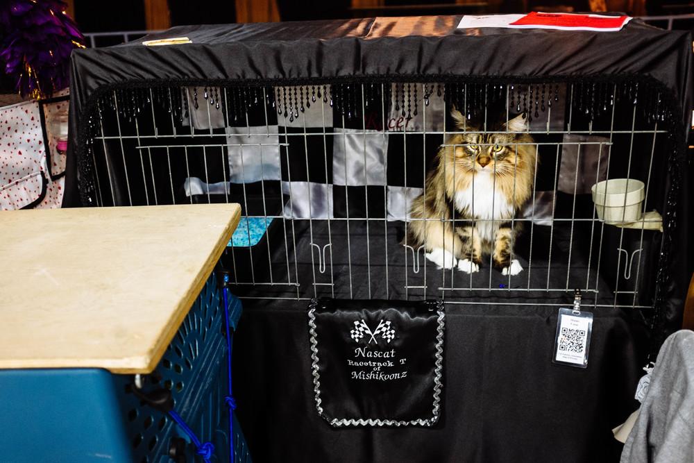WICHITA CAT SHOW_2015-14.jpg