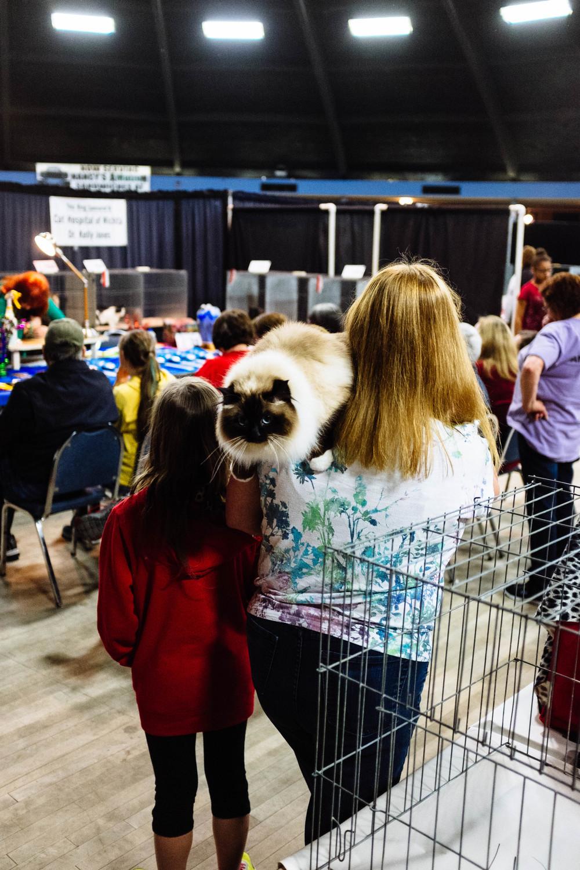 WICHITA CAT SHOW_2015-17.jpg