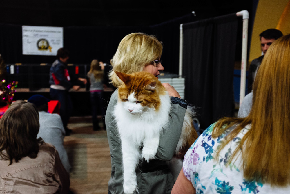 I decided to start going to events that I usually never attend.  The Wichita Cat Show was one of them.