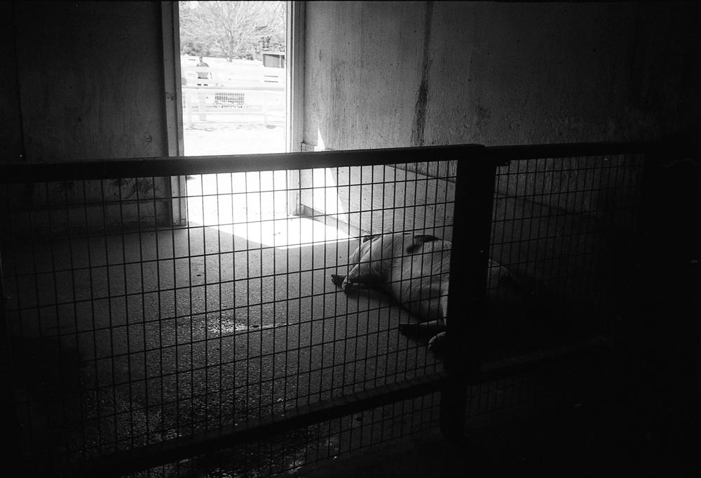 Sedgwick County Zoo, 2017