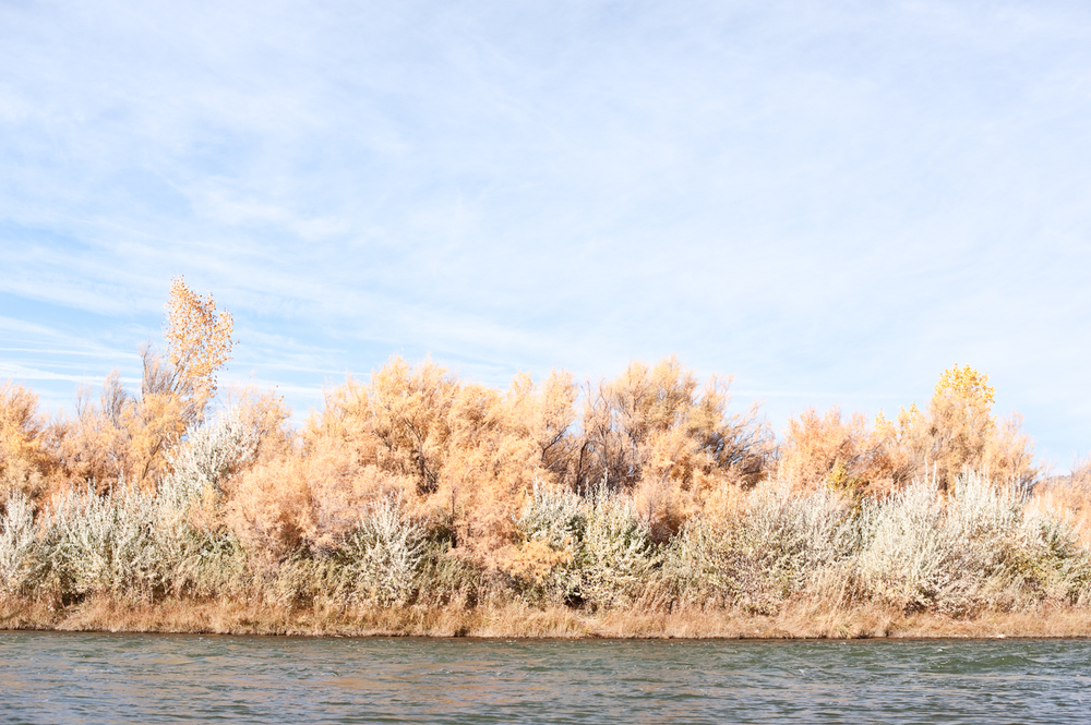 21_colorado_fall_colors_8400.jpg