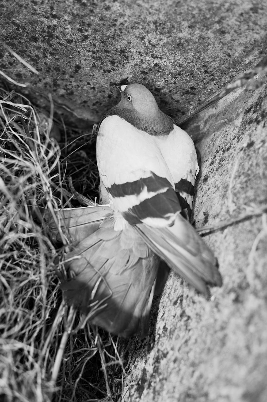 150804_this_pigeon_6864.jpg