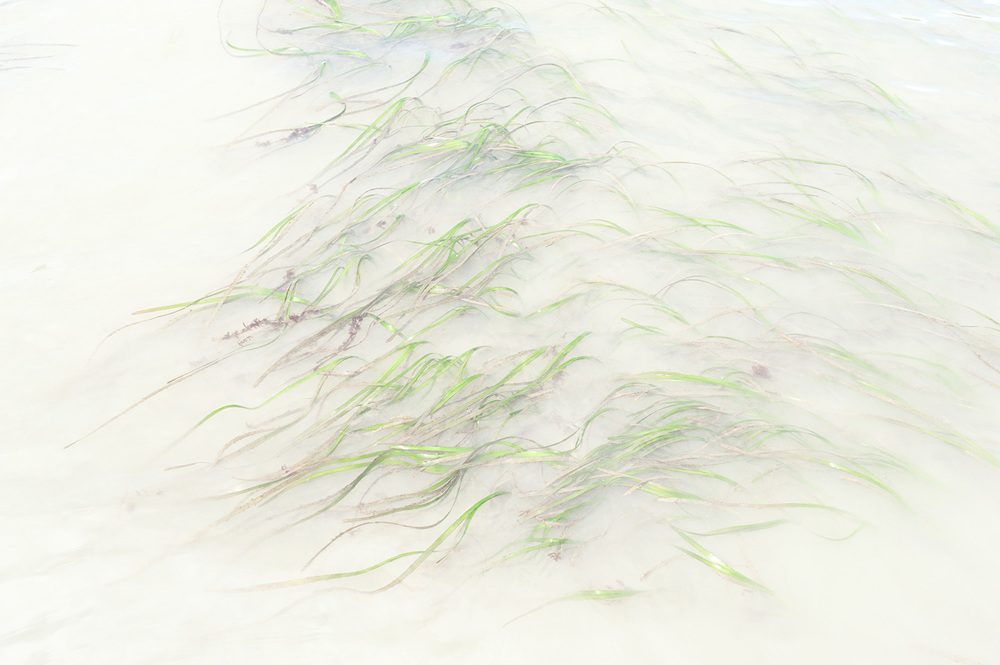 150815_eelgrass_abstract_7416.jpg