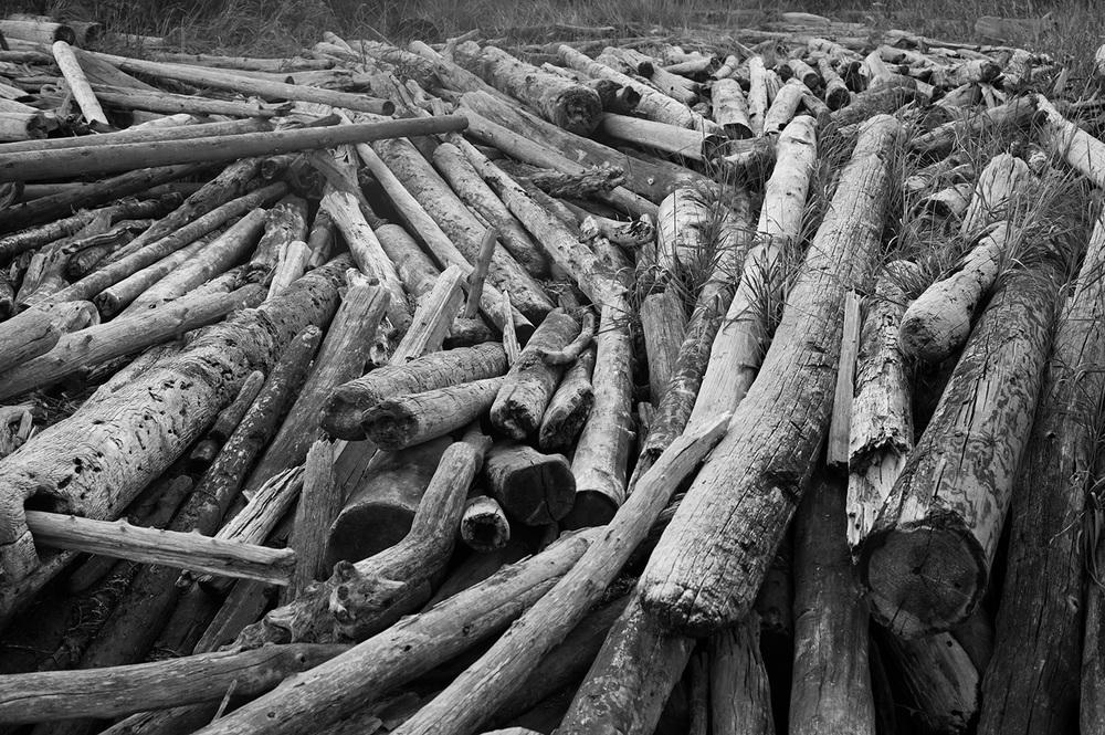 150923_driftwood_0547.jpg