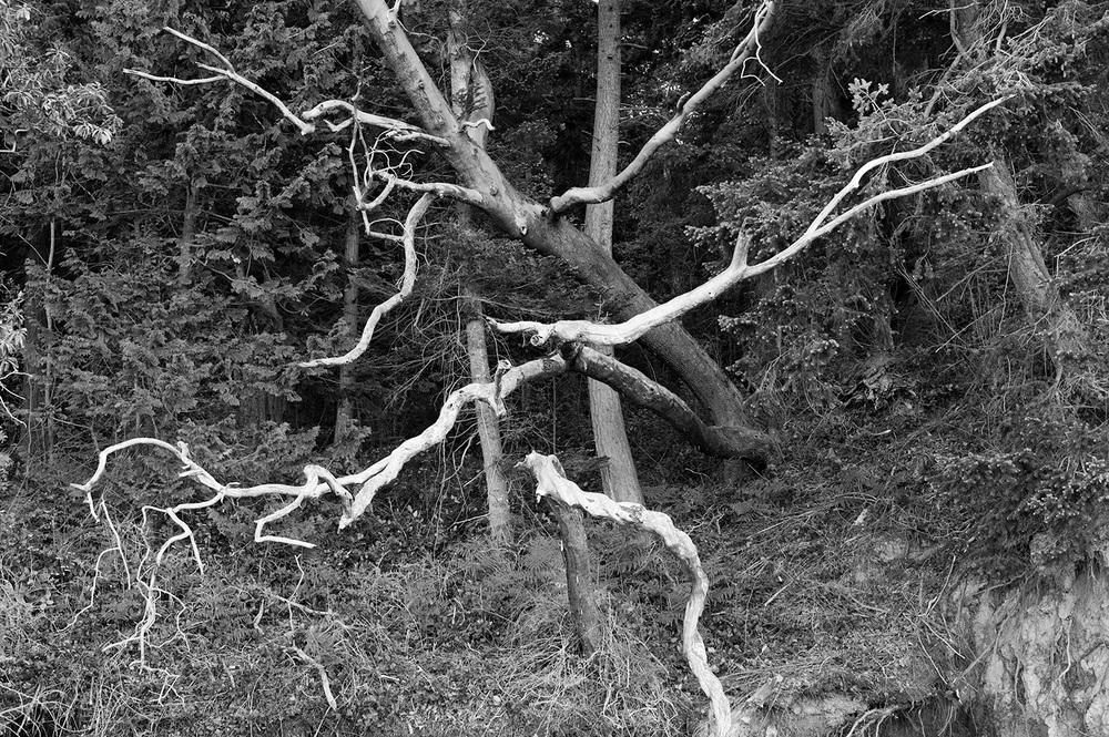 160430_crazy_trees_7030.jpg