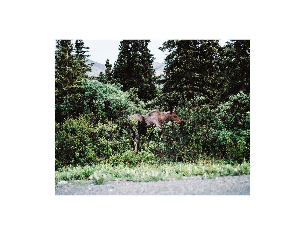 Alaska_Slide17.jpg
