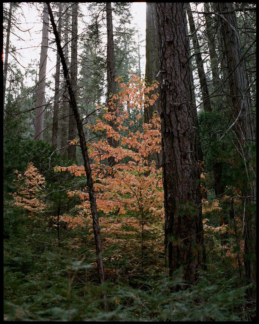 2017 Yosemite