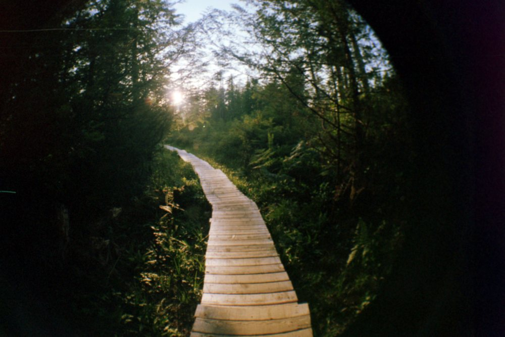 This is a caption for this image. Olympic State Park, film.