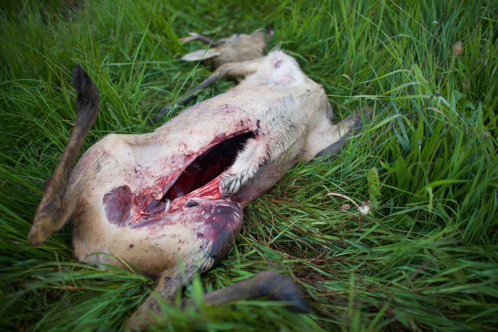 hunting-18.jpg
