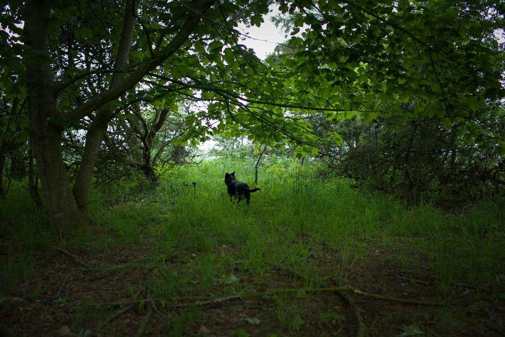 hunting-10.jpg