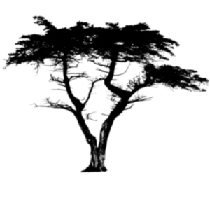 the-bonsai-giant2.png