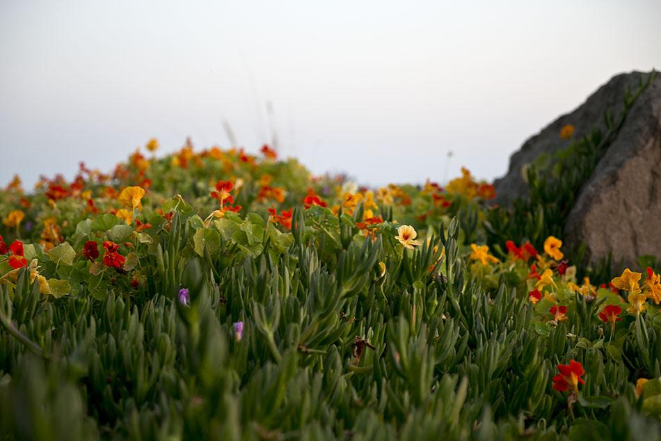LB Peninsula Flowers2_72.jpg