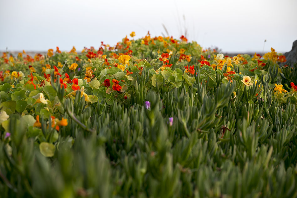 LB Peninsula Flowers3_72.jpg