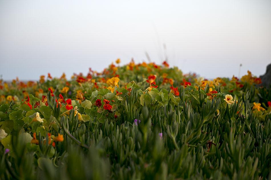 LB Peninsula Flowers4_72.jpg