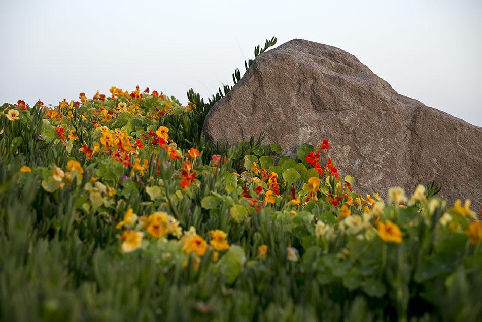 LB Peninsula Flowers5_72.jpg