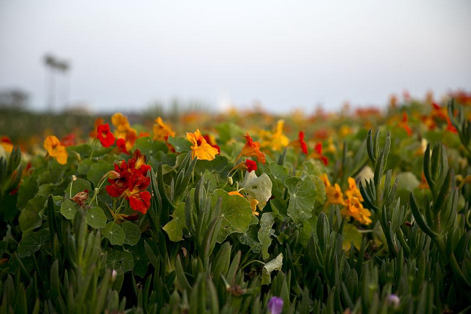 LB Peninsula Flowers6_72.jpg