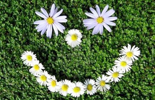 happy plant flourishing