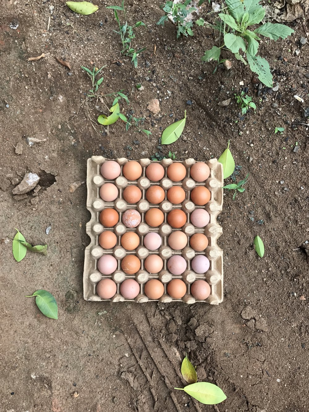 £19 = 25 Baby Chicks - The more chickens we have, the more healthy eggs we have to feed our Cherish children, our students, our staff, and to sell locally as a form of sustainability.