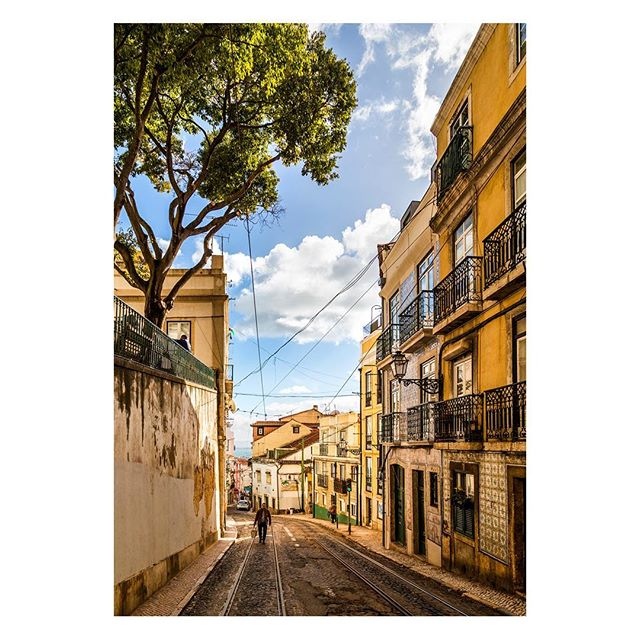 Lisbon, Portugal 🇵🇹 . . . #lisbon #lisboa #portugal #street #road #walk #travel #portuguese #tree #city #urban #old #historic #lisbonportugal