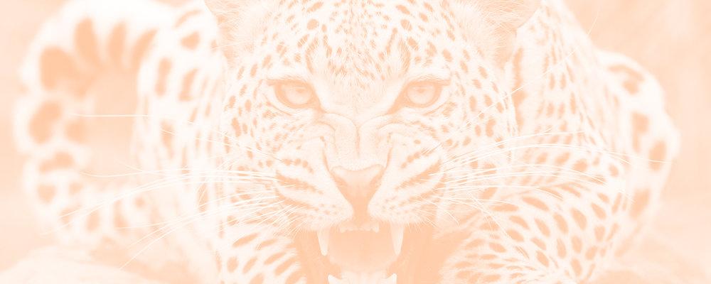 SN_leopard_blog.jpg