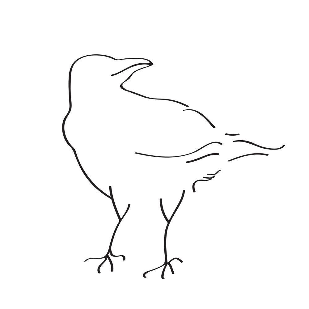 SN_Crow.jpg