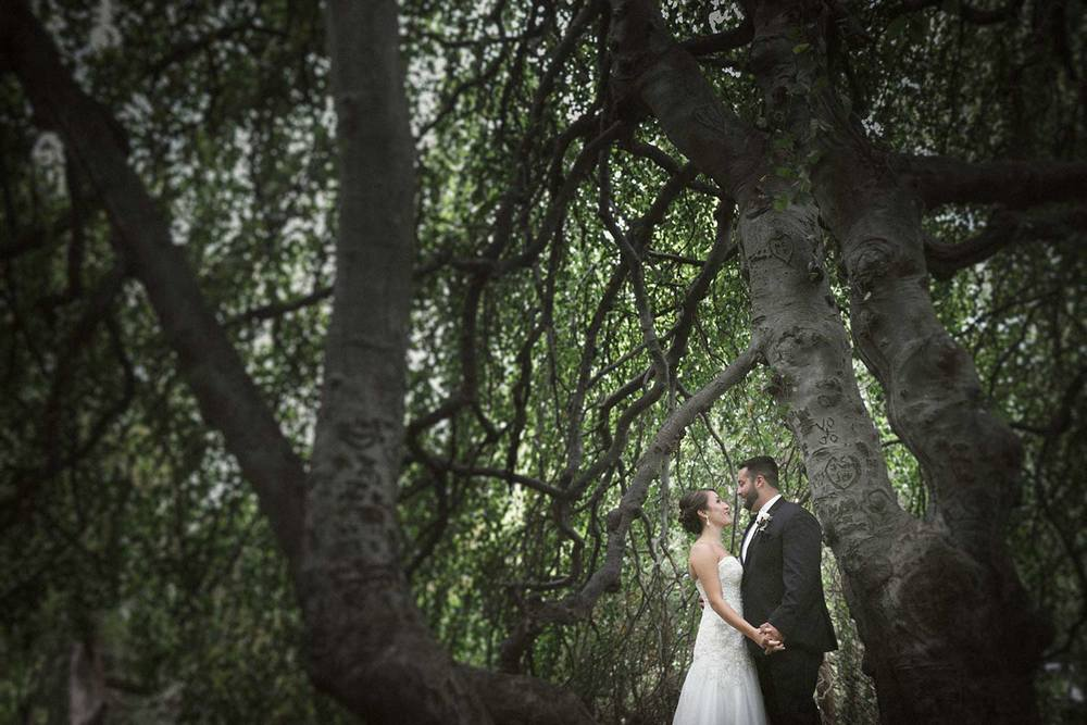 bride and groom under the willow tree at glen magna farms wedding